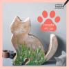 kat voor in tuin beschilderen